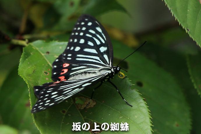 00-E1DX9259-LR.jpg