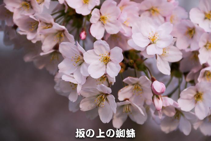 00-IMG_7257-2-LR-2.jpg