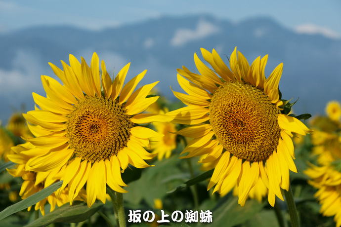 01-DSC03084-LR.jpg