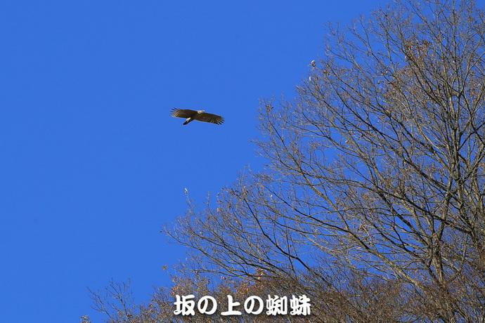01-E1DX2078-Edit-LR1.jpg