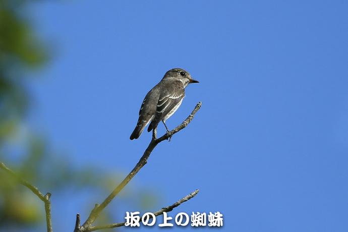 01-E1DX4662.jpg
