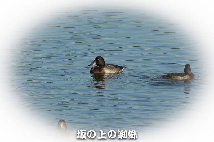 01-E1DX5840-LR1.jpg