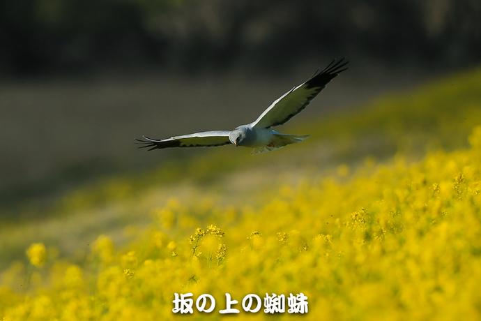 01-E1DX9212-2-LR.jpg