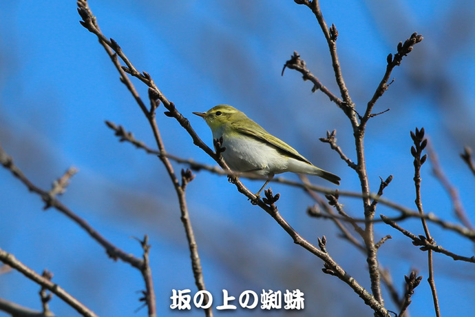 01-E1DX9414-2-LR1.jpg
