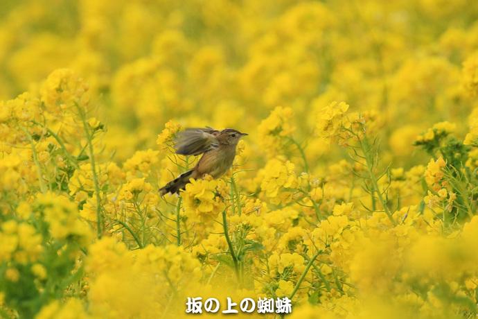 01-EO7D3837-2LR-1-2.jpg