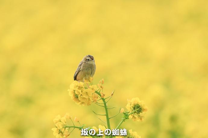 01-EO7D5652-2LR-1.jpg