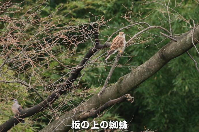 01-TACK4698-2-LR.jpg