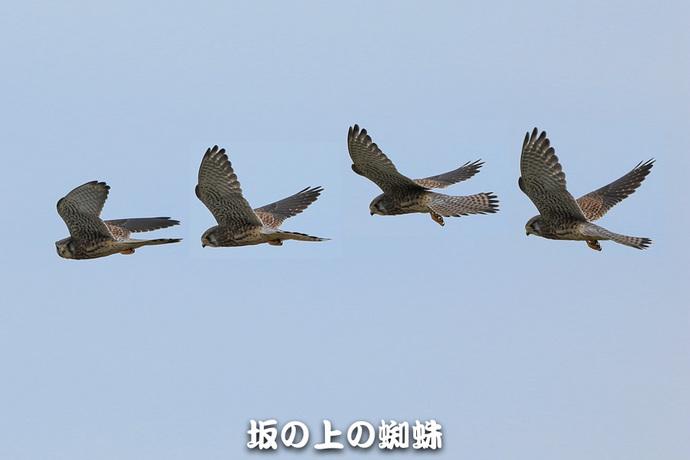 01-TACK6507集合-1-LR.jpg