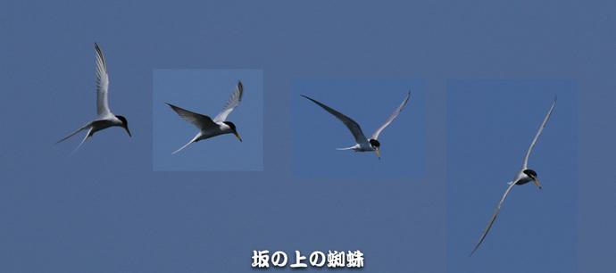 01-TACK7745合成-2LR-1.jpg