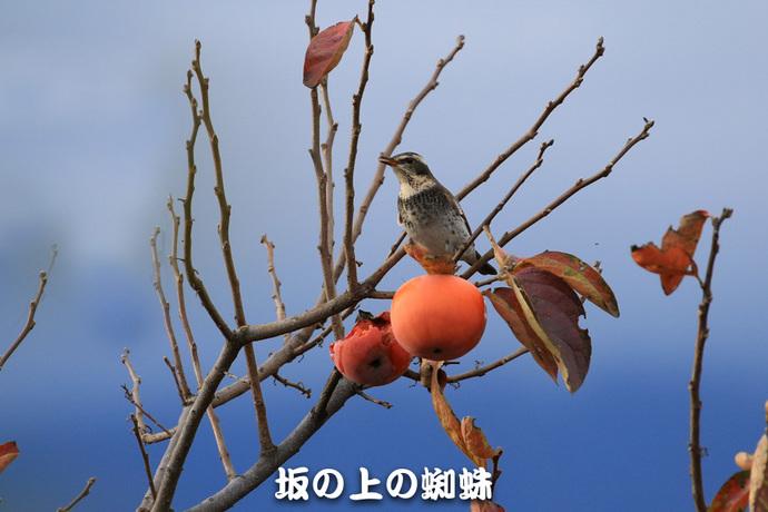 01-TACK9488-4-LR-2.jpg
