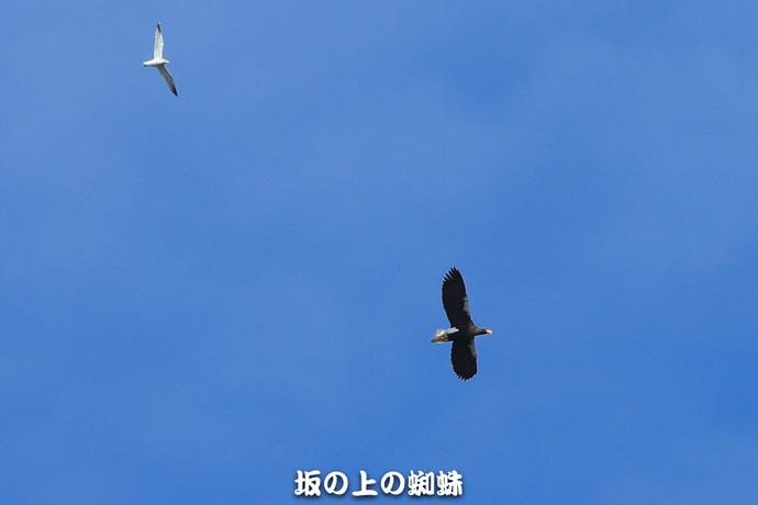 02-1DX8632.jpg