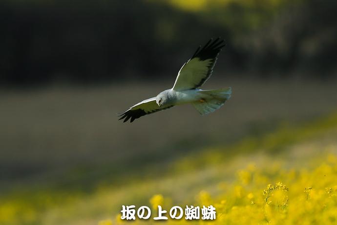 02-D1DX9218-2-LR.jpg