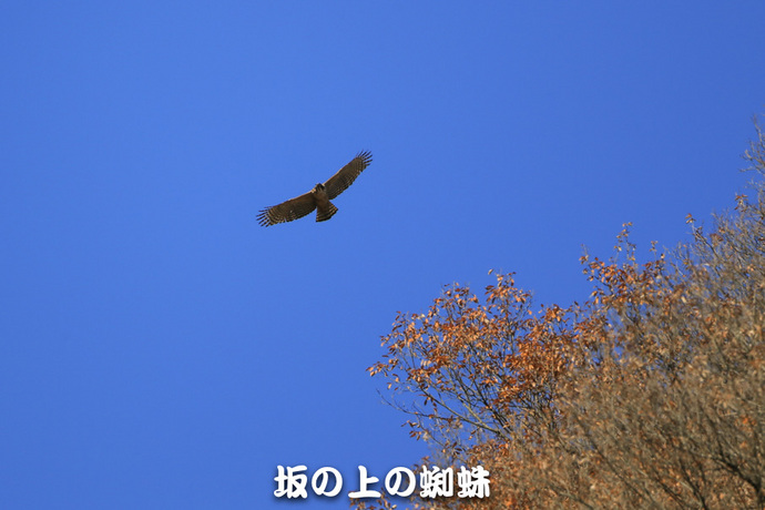 02-E1DX2170-LR1.jpg