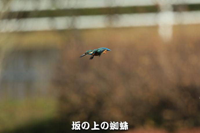 02-E1DX2529-LR.jpg