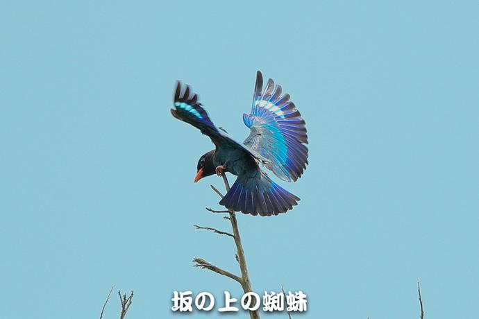 02-E1DX5093.jpg