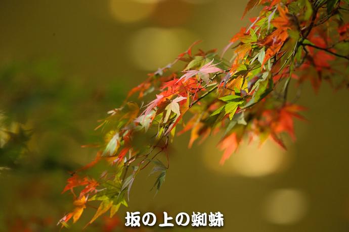 02-E1DX5922-2-LR1.jpg