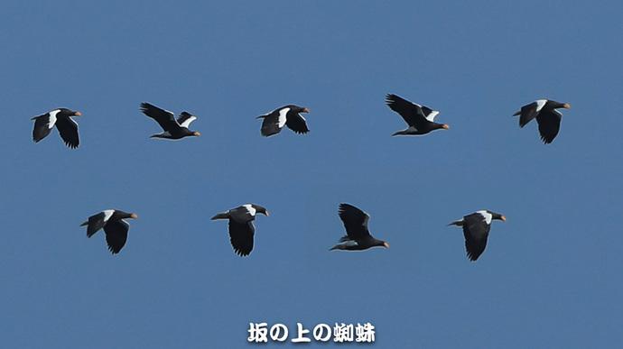 02-E1DX6909-連続-2LR-1.jpg