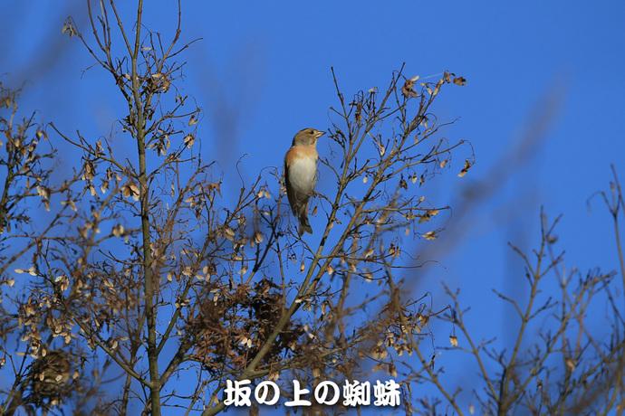 02-E1DX9774-LR1.jpg