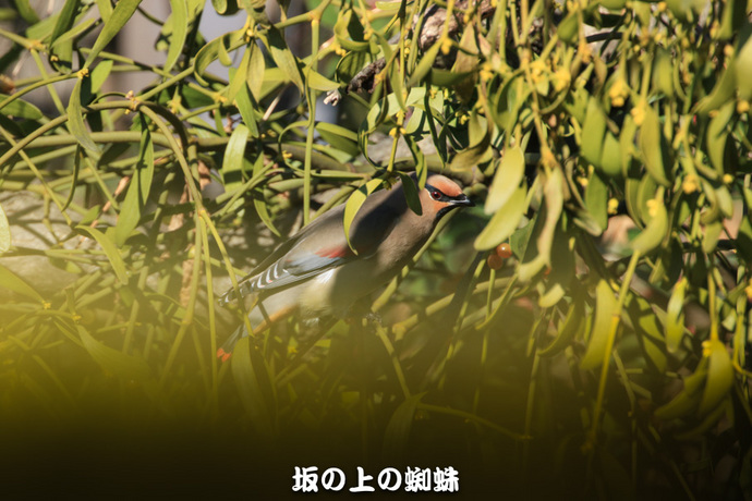 02-EO7D0101-2LR-1.jpg