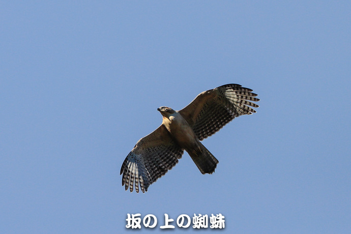 02-TACK0166.jpg