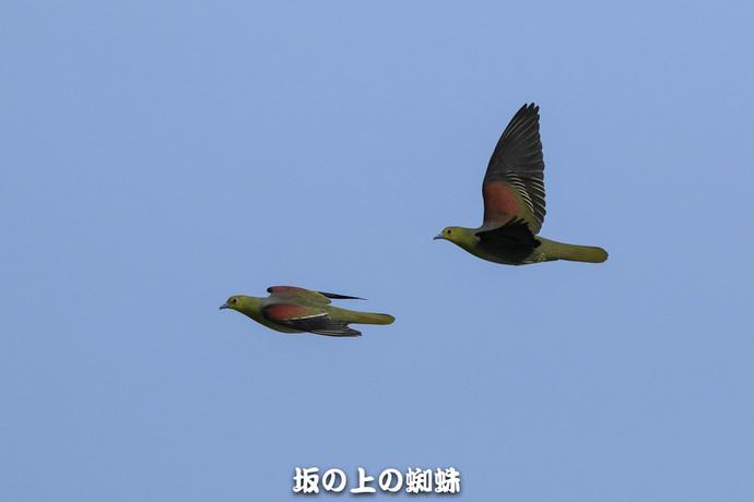 02-TACK1877-2ps-2LR-1.jpg