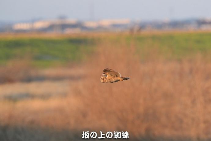 02-TACK4687.jpg