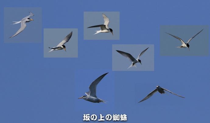 02-TACK7947合成-2LR-1.jpg