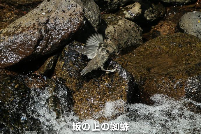 03-E1DX0100-2-LR.jpg