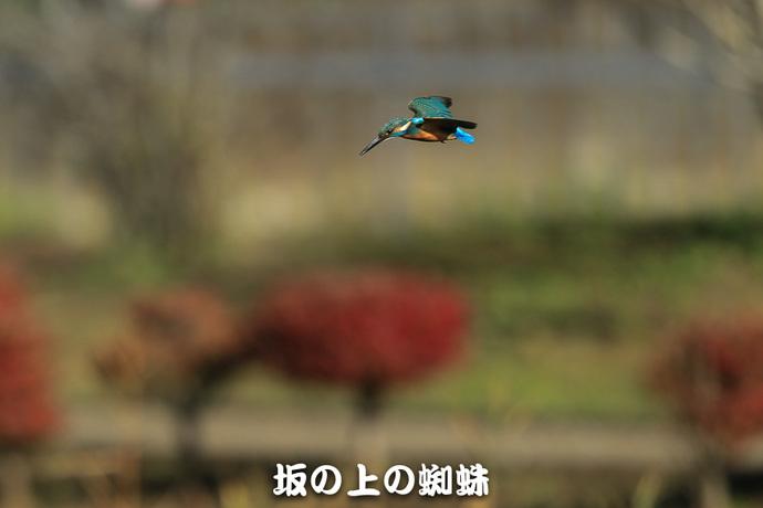 03-E1DX2532-LR.jpg