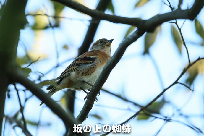 03-E1DX8195-2-LR1.jpg