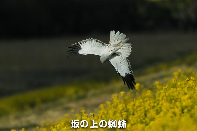 03-E1DX9220-2-LR.jpg
