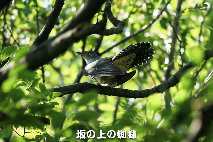 03-E1DX9911-2-LR.jpg