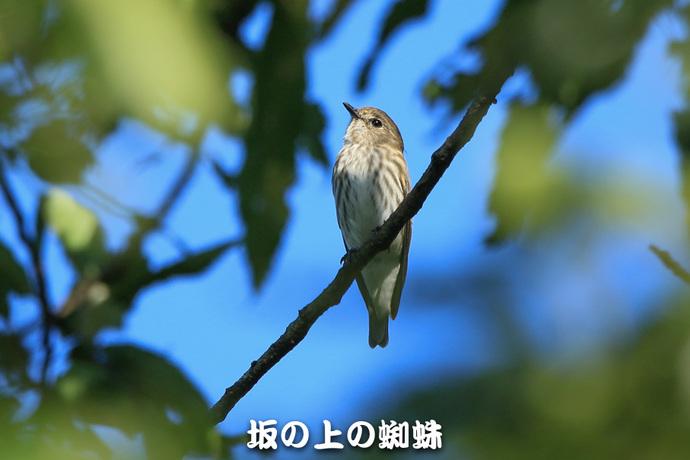 03-TACK2443-LR.jpg