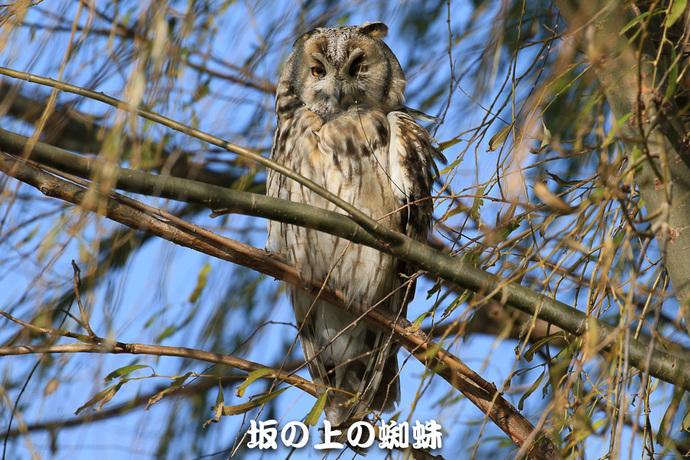 03-TACK4818-LR.jpg