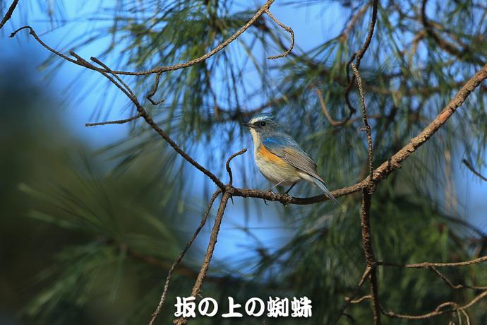 04-E1DX0813-2-LR-2.jpg
