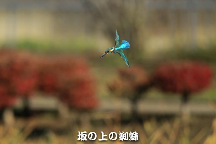 04-E1DX2533-LR.jpg