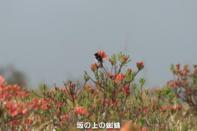 04-E1DX4881-2LR-1.jpg