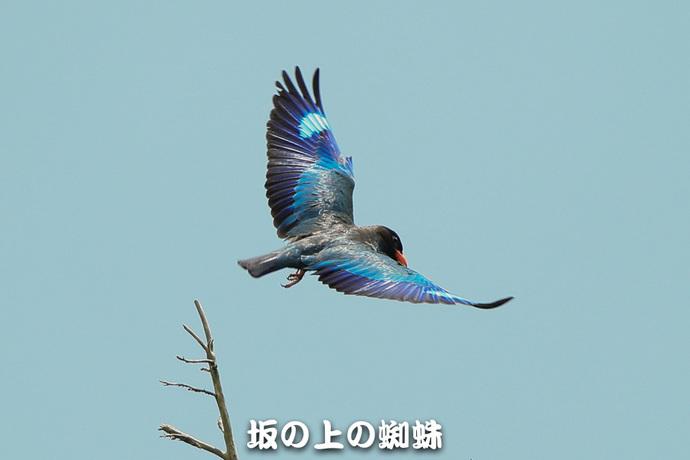 04-E1DX5102.jpg