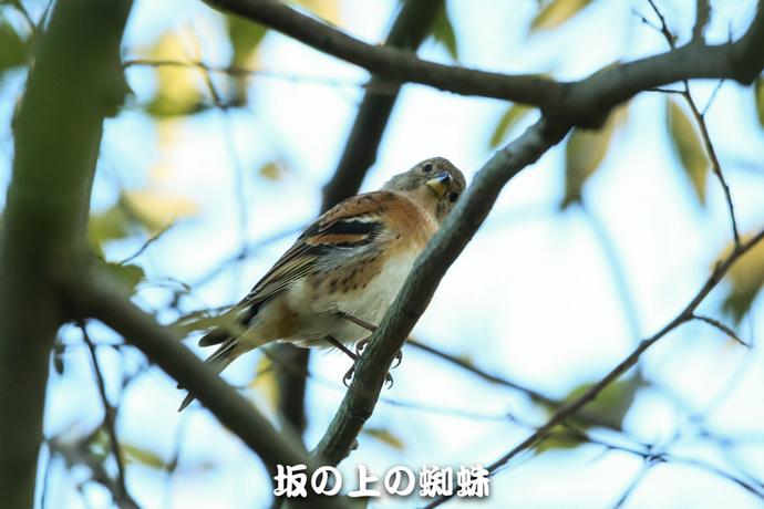 04-E1DX8196-2-LR1.jpg