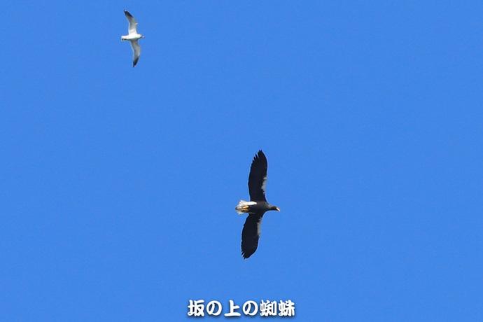 04-E1DX8646.jpg