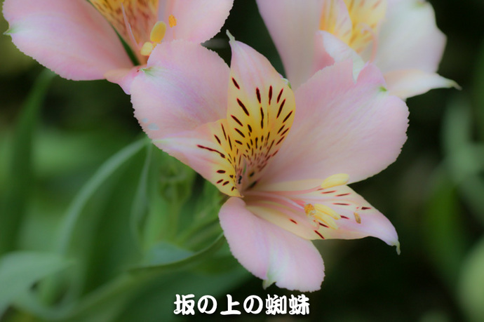 04-IMG_7783-2-LR.jpg