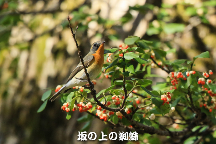 04-TACK2001-2-LR1-2.jpg
