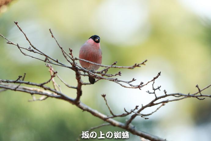 04-TACK4648LR-1.jpg