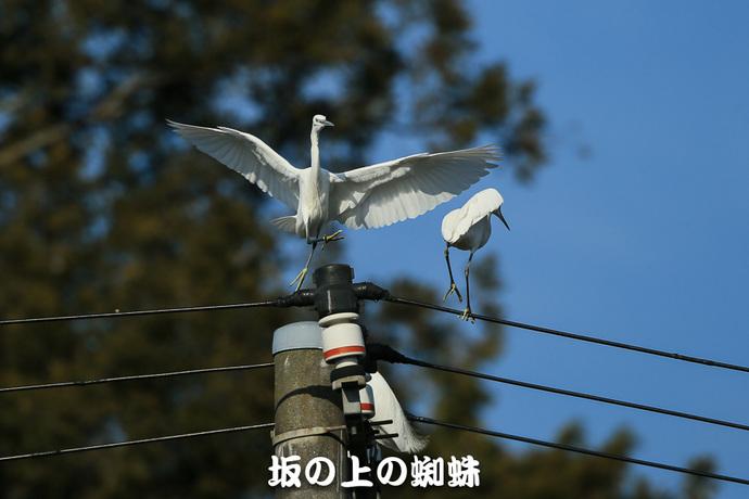 05-E1DX8084-LR.jpg