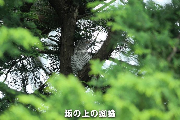 05-E1DX9648.jpg