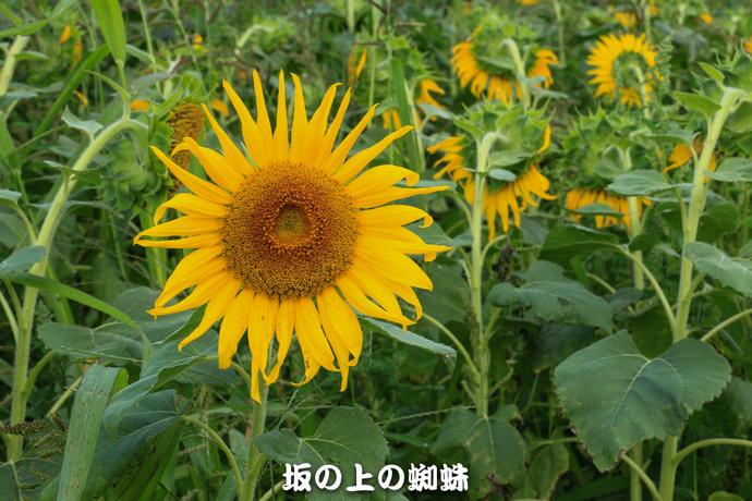 05-IMG_4708-LR.jpg