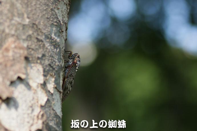 05-IMG_7808-2-LR.jpg
