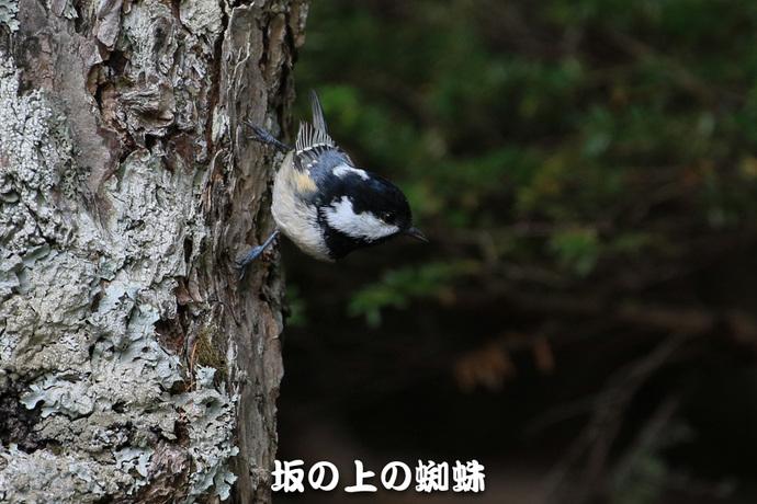 05-TACK4642-LR.jpg