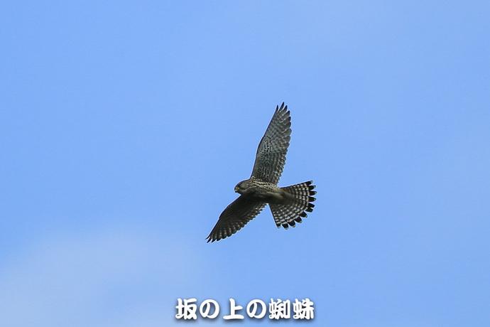07-E1DX2659-LR.jpg