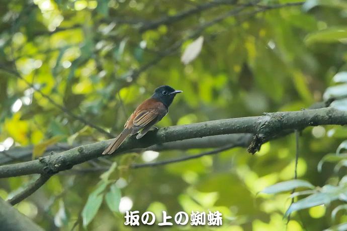07-E1DX4694.jpg